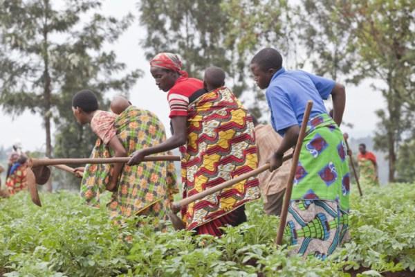Image d'archive Selon l'Organisation des Nations-Unies pour l'Alimentation et l'agriculture (FAO) la faim pourrait se conjuguer au passé en 2025 en Afrique